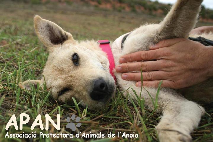 APAN - Associació Protectora d'Animals de l'Anoia