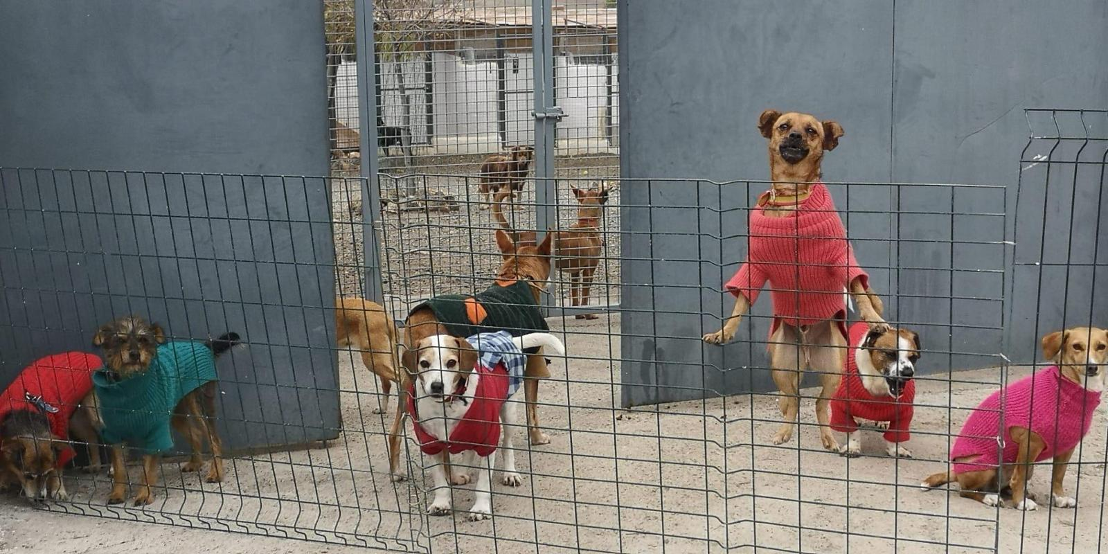 Animal Shelter SIERRA NEVADA (Granada, Spain)