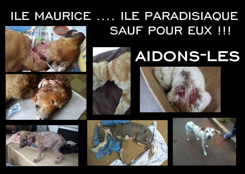 Agir pour les chiens de l'île Maurice
