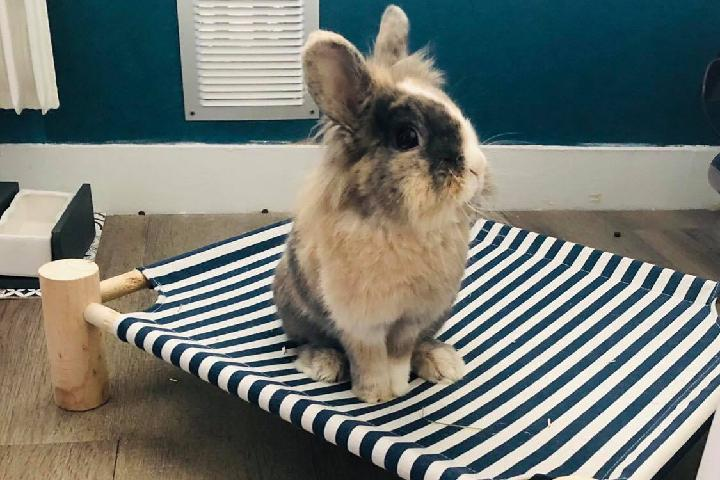 Association pour les lapins