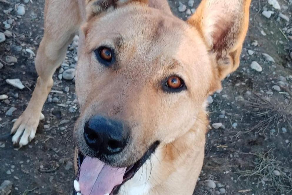 Dog Rescue Calan (DRC)