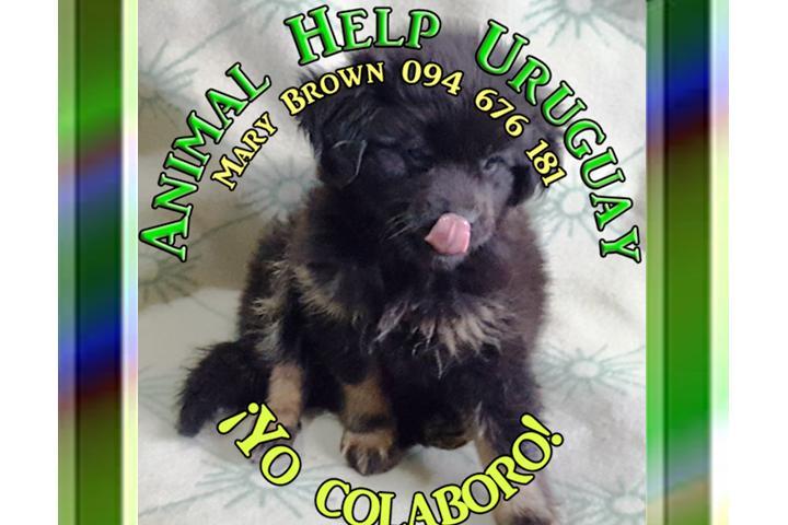 ANIMAL HELP URUGUAY