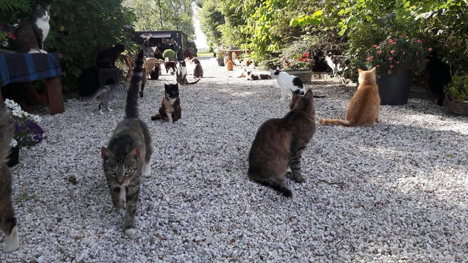 Stichting Wetland Cats