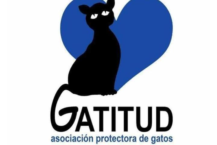 Ayuda para comprar pienso para los gatos de nuestras colonias.GATITUD