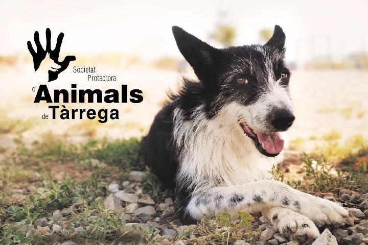 Protectora d'Animals de Tàrrega
