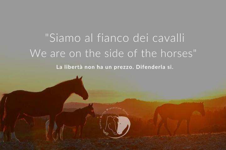IHP Italian Horse Protection Team