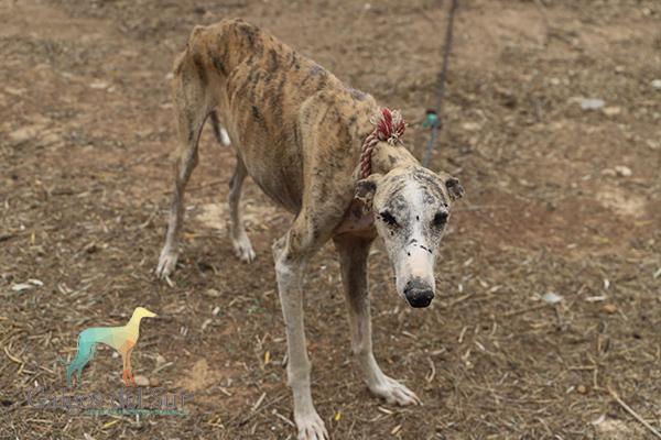 Lucha Legal contra el Maltrato Animal