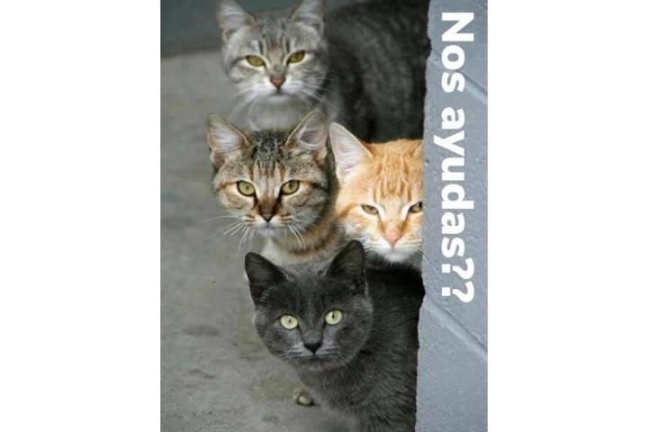 Gatos AlmaAnimal (Salvando Gatos)