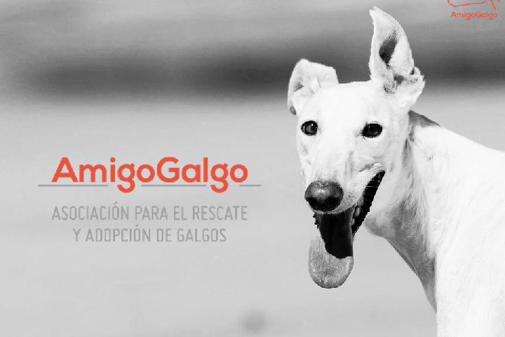 Amigo Galgo