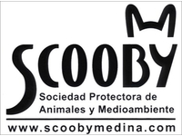 Scooby Medina