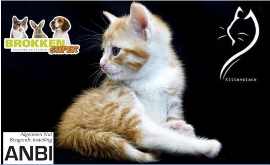 Stichting Kittenplace
