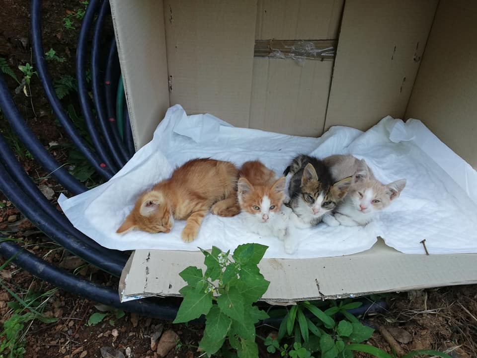 Help for stray animals in Greece
