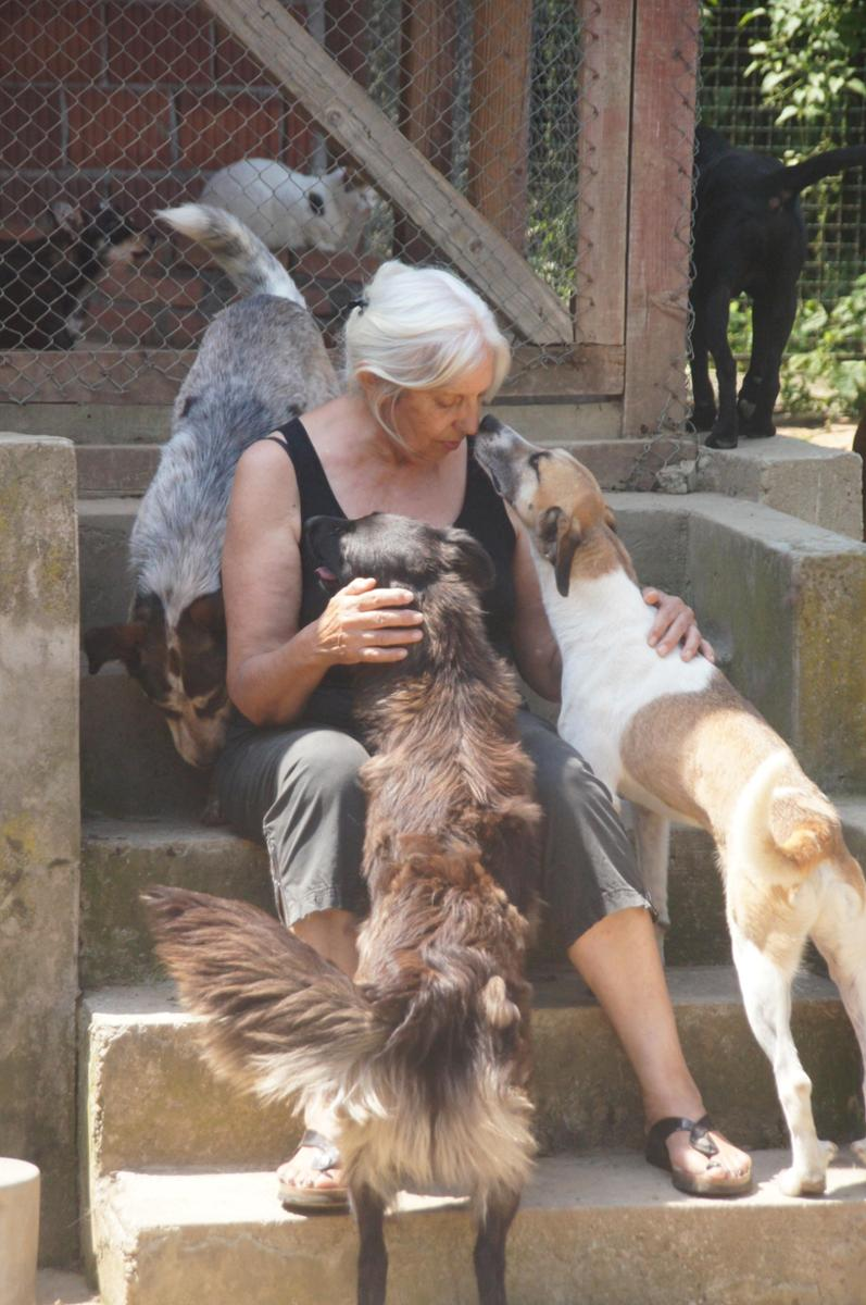 Traurige Hundeseelen in Serbien