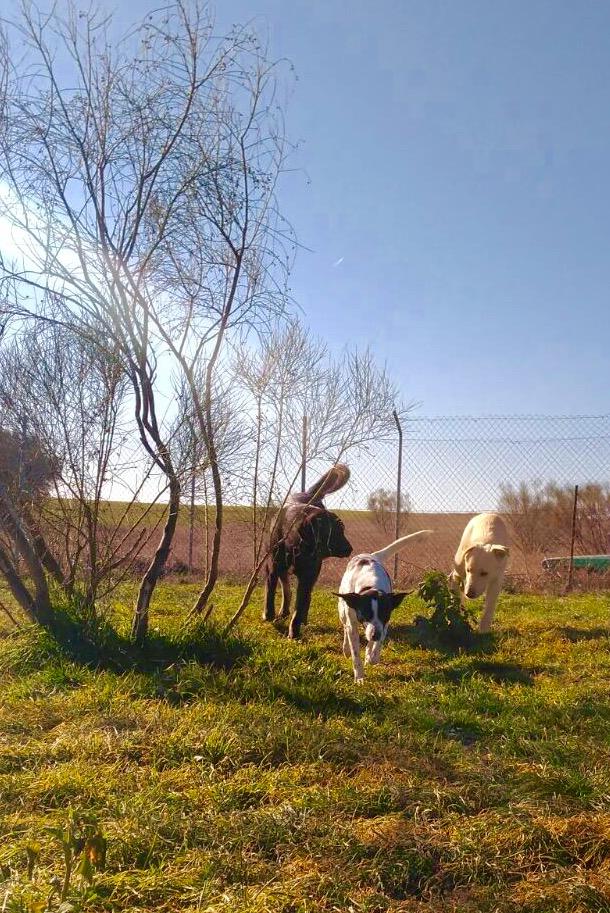 Rescate, Cuidados medicos y esterilizacion de cachorros no adoptados