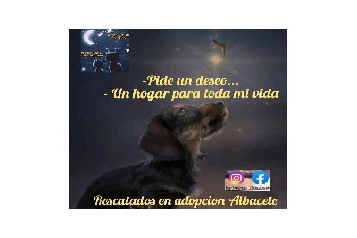 Rescatados en adopción Albacete