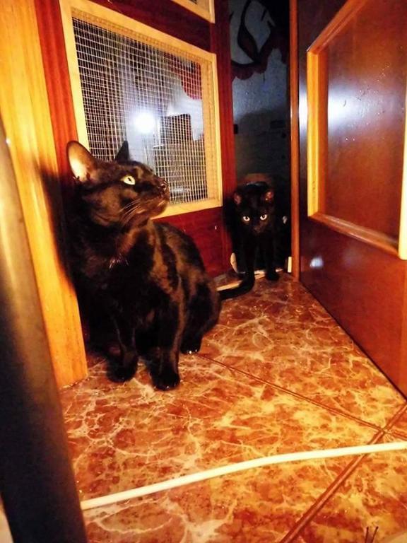 Colonias felinas