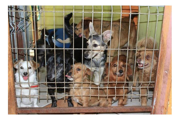 Tierschutzverein Perelka e.V.-Teaming