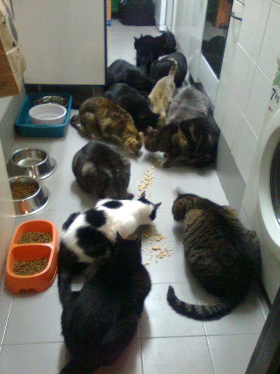 Los Gatos de Anyuska necesitan ayuda.