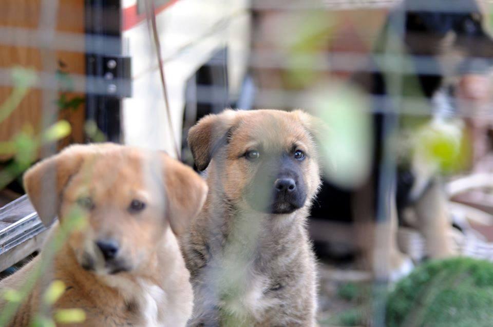 Asociación Protectora de Animales