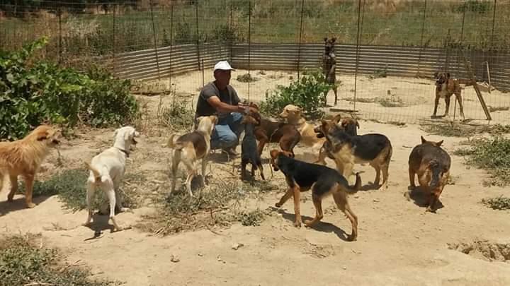 Dringende Hilfe für Streuner auf Kreta und für George Ofarnidis benötigt