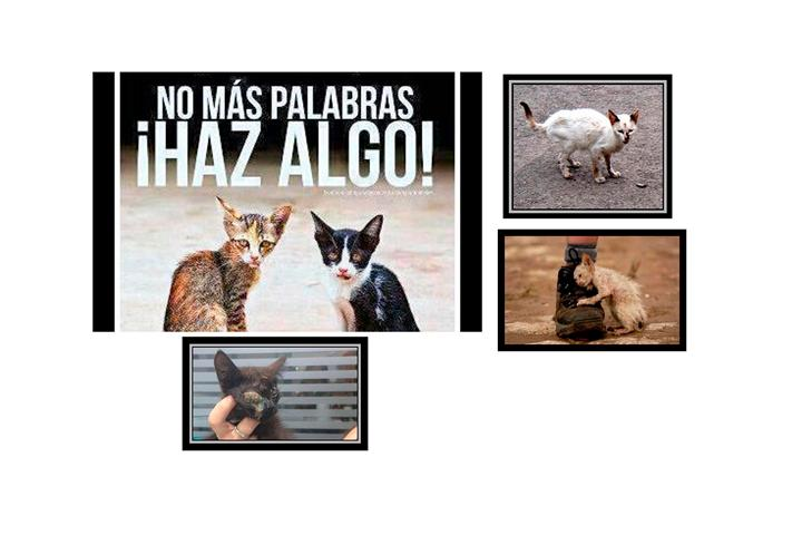 AYUDA Gatos callejeros Madrid