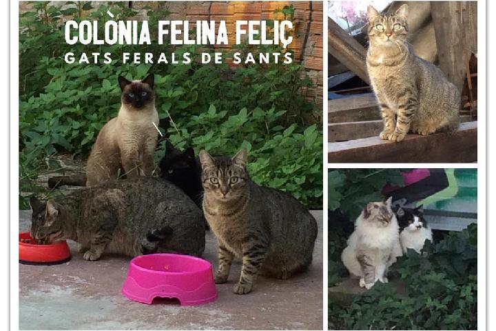 Colònia Felina Feliç