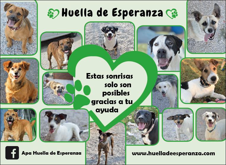 A.P.A. HUELLA DE ESPERANZA