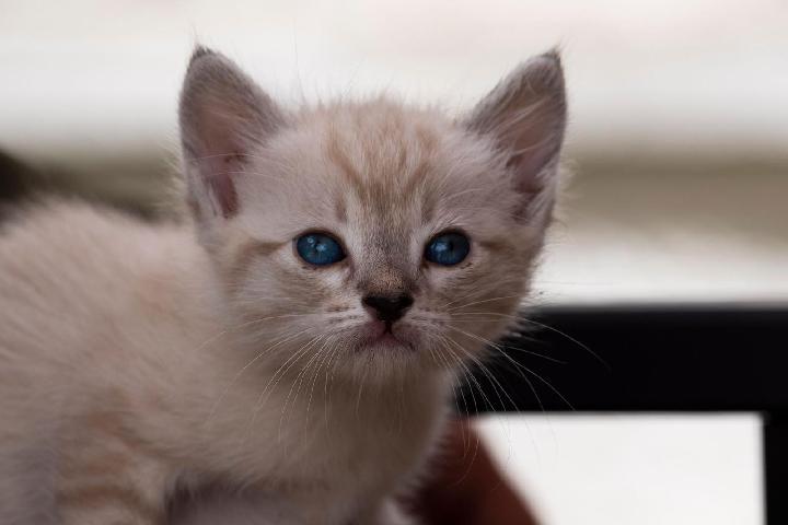 Associació Protectora d'Animals Peluts Lliçà - Lliçà d'Amunt