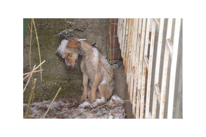 EhrenWert - Verein für Tierschutz und Menschlichkeit