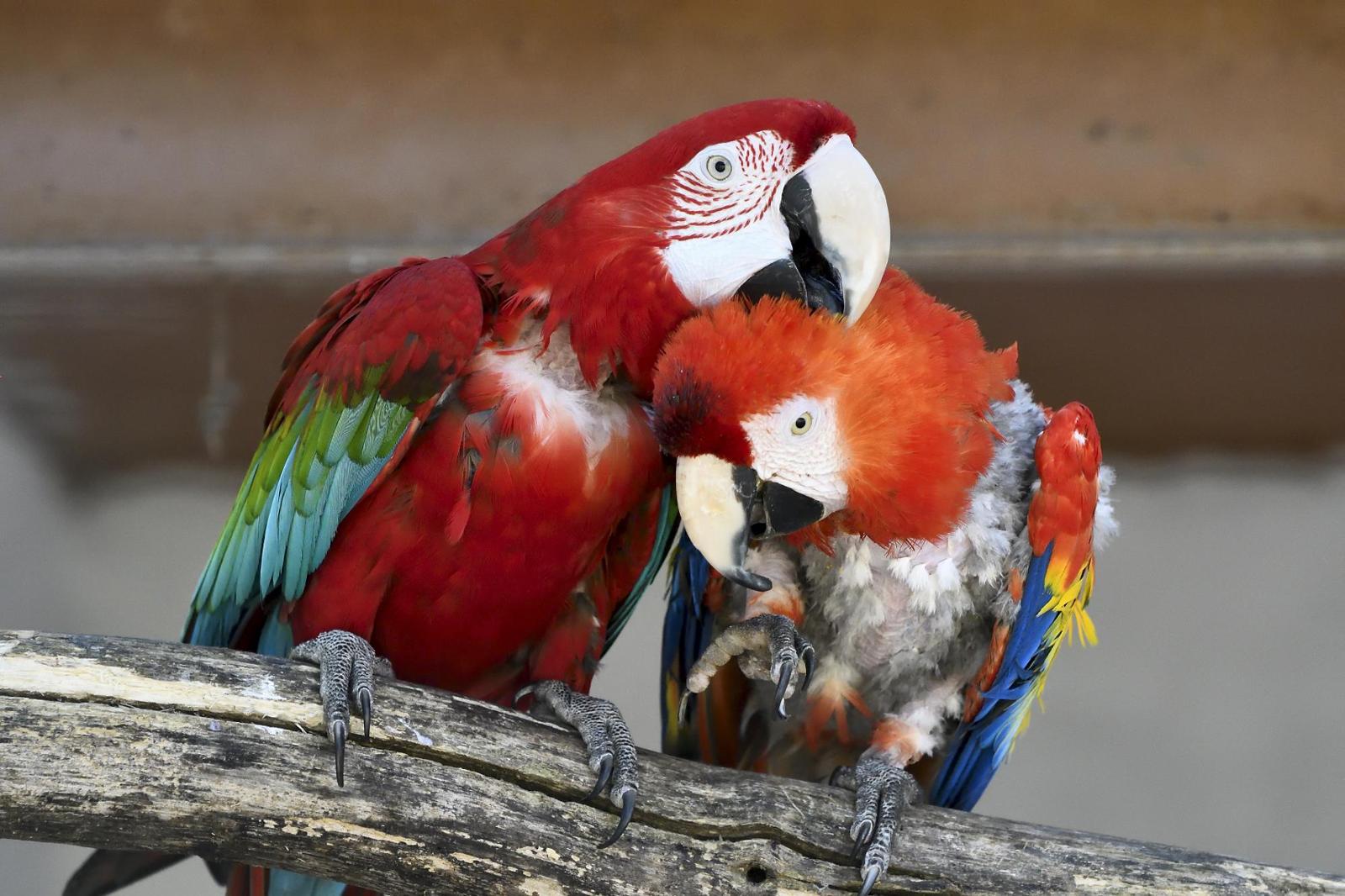 ¡Ayúdanos a combatir el tráfico ilegal de especies!