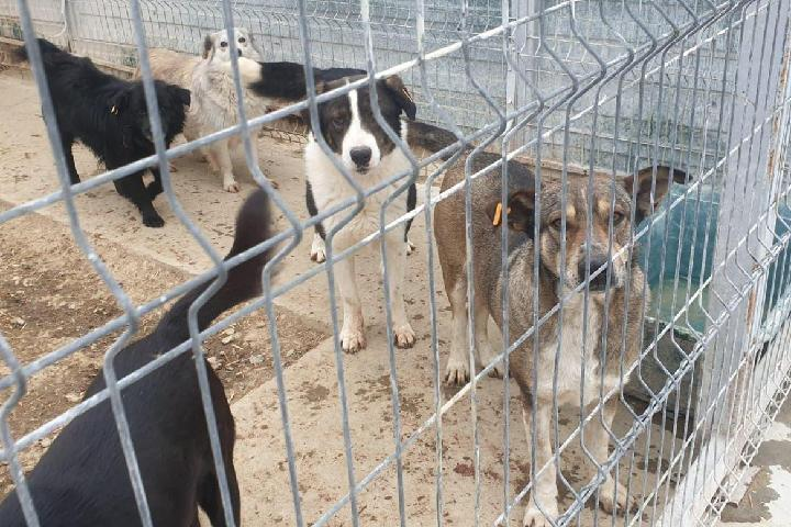 Help the Dogs at Galati Shelter