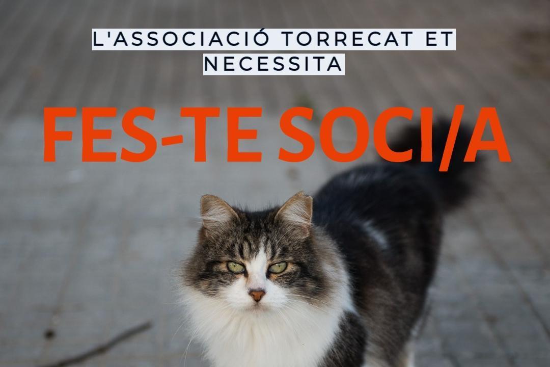 TORRECAT. Protegim els gats del carrer.