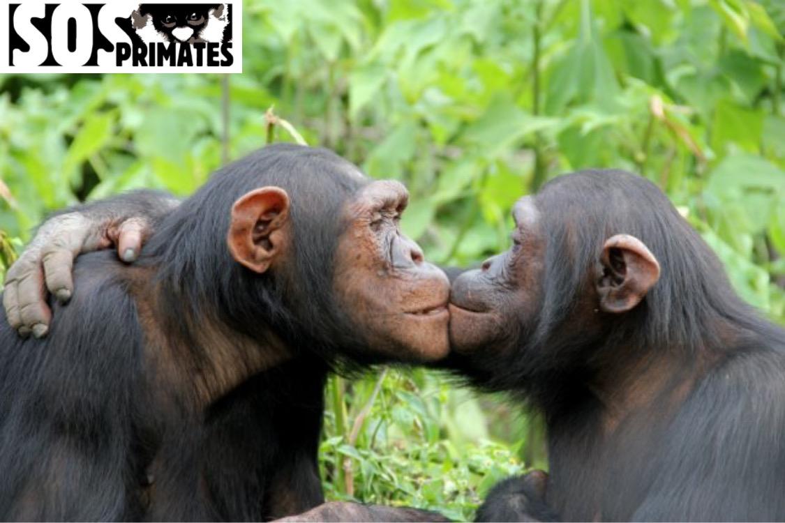 SOS Primates