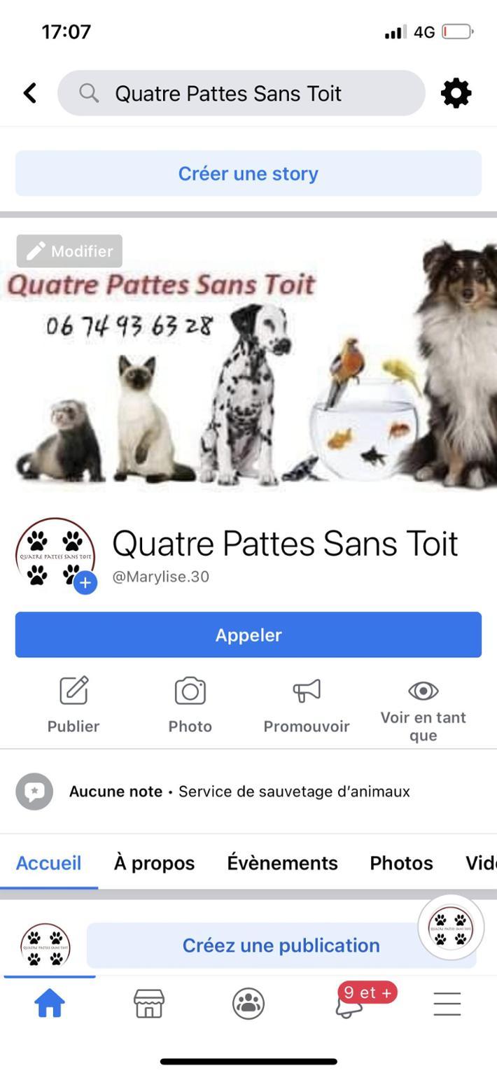 QUATRE PATTES SANS TOIT
