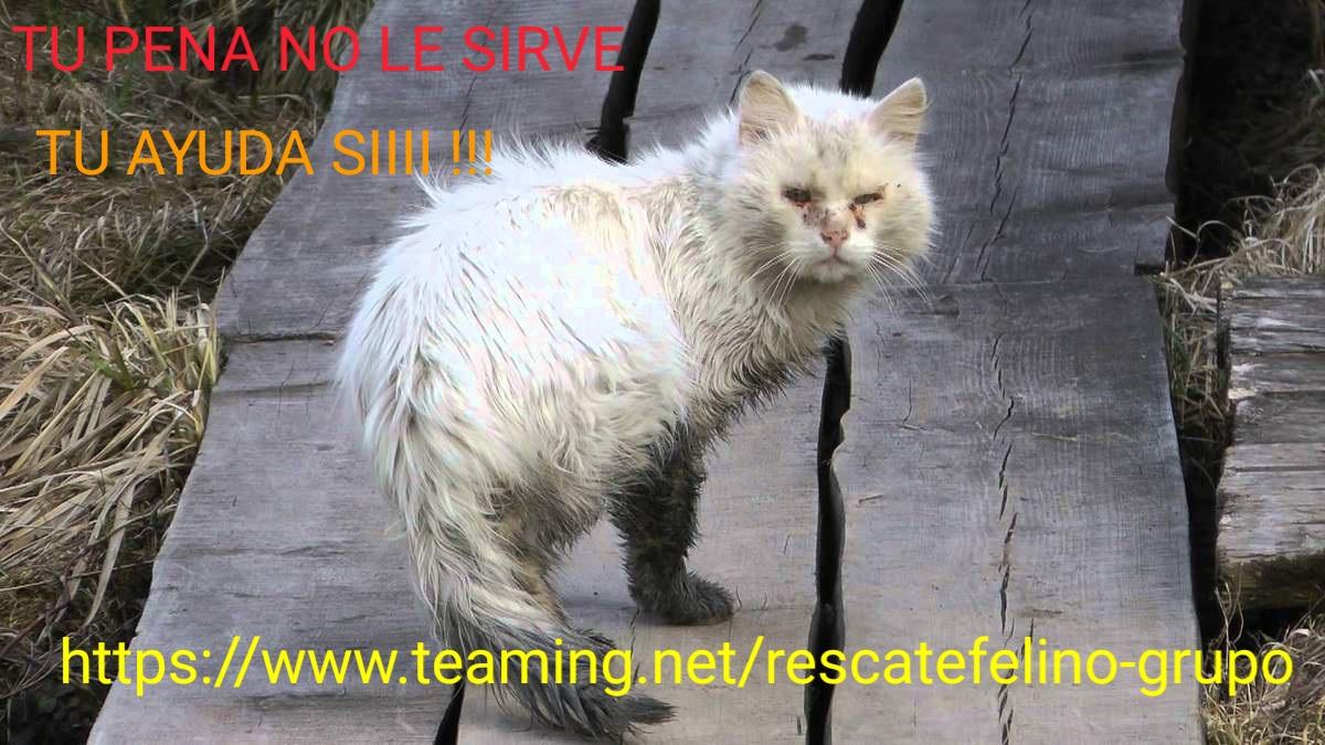 Rescate Felino