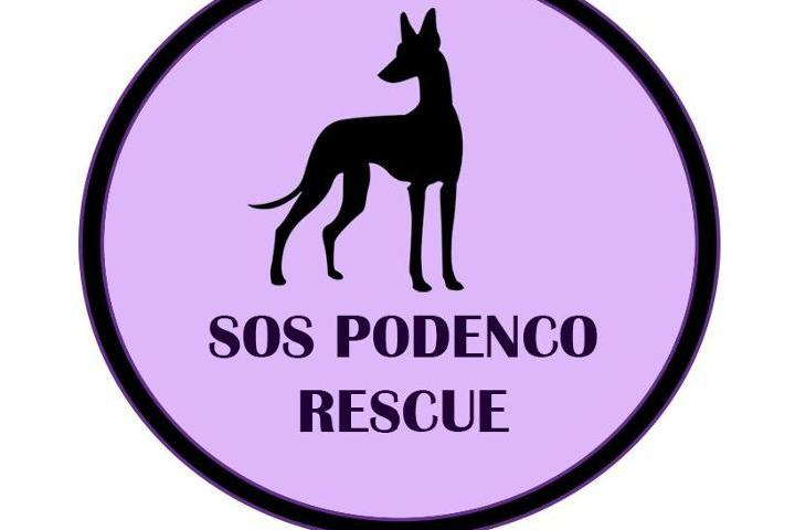 SOS Podenco Rescue