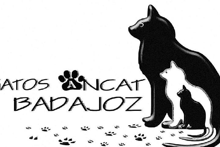 Asociación Ancat, adopta un gato