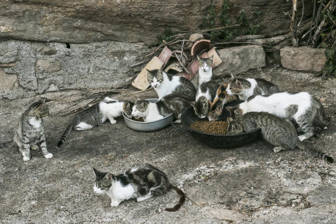 Gatos de Vall-llebrera