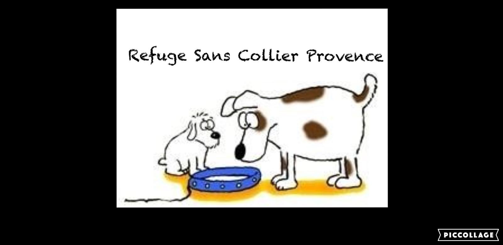 Association Sans Collier Provence - Refuge pour chiens