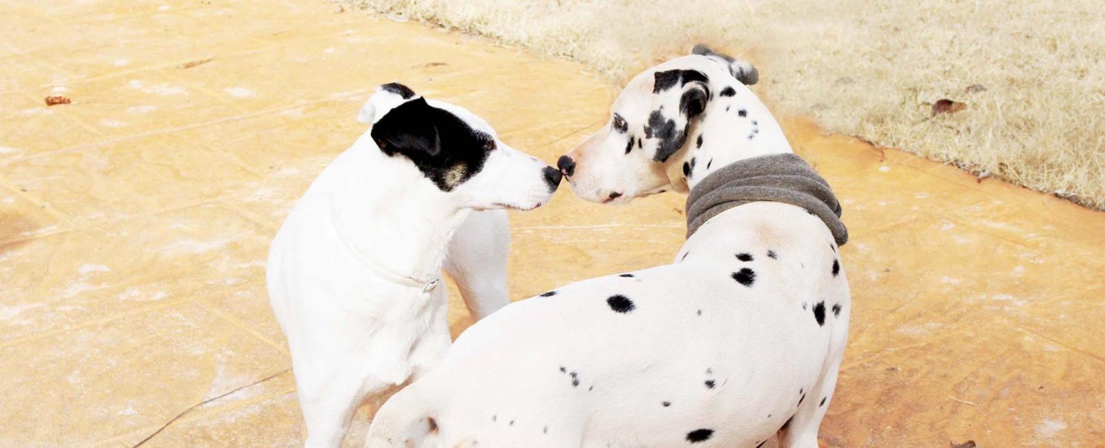 SOS Animalicos - Save one life today
