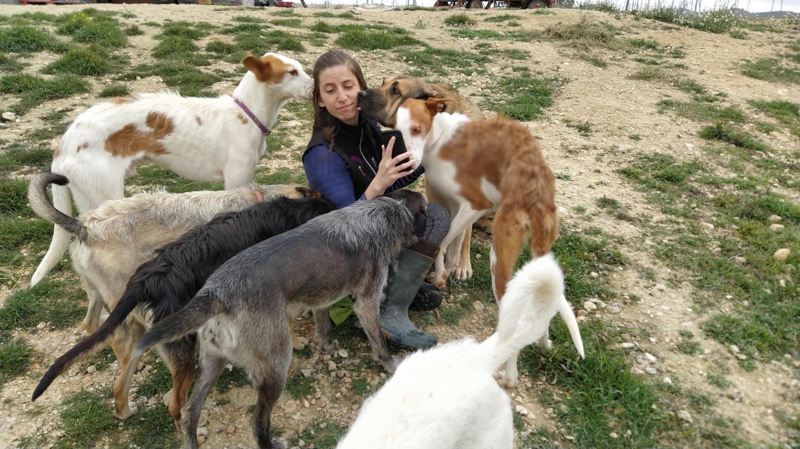 Perros en Adopción en C.C Canbezuelos