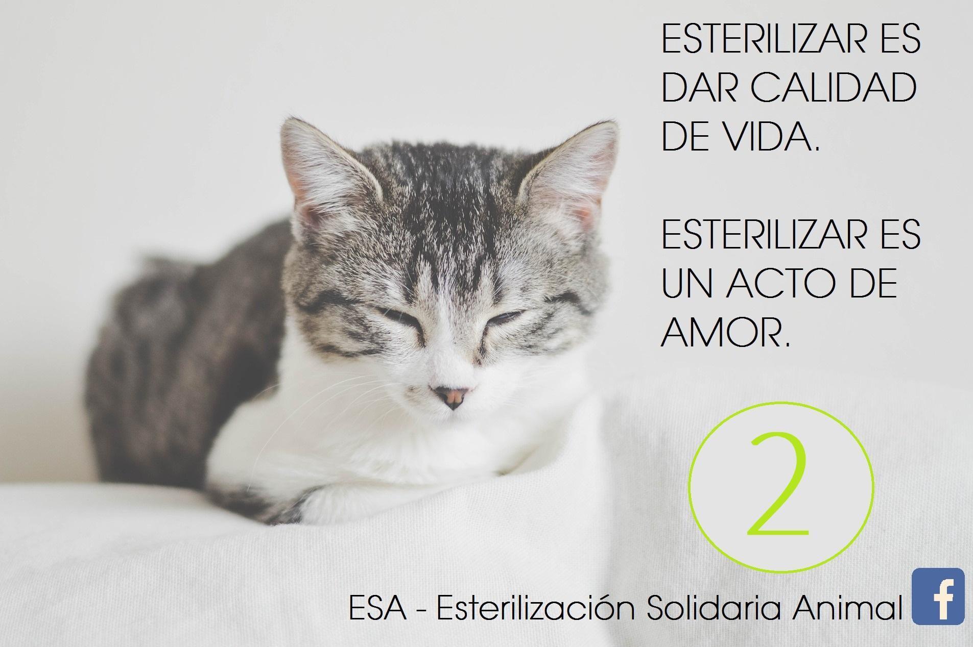 ESA - Esterilización Solidaria Animal 2