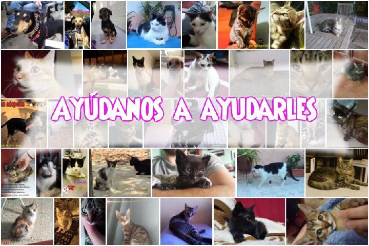 Solidaridad con los gatos y perros de Huelva