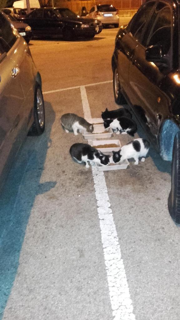 Gatitos del depósito