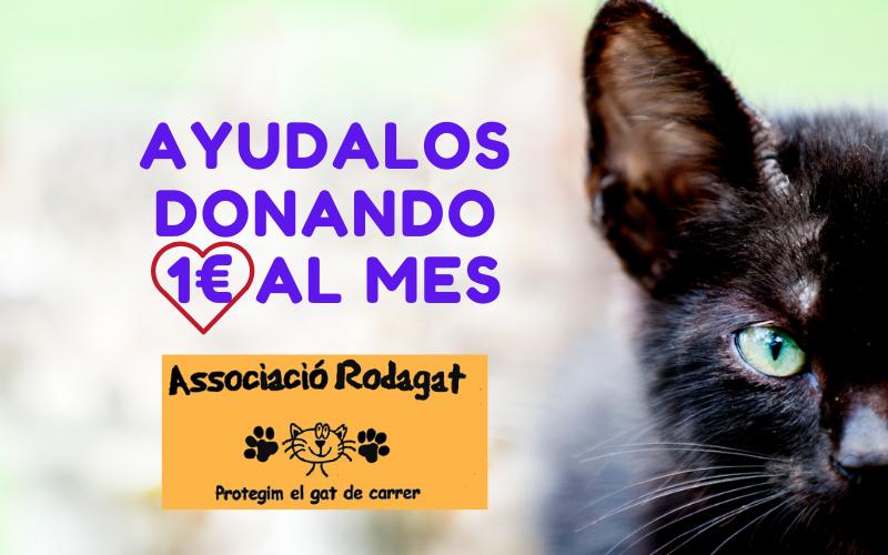 ASSOCIACIÓ RODAGAT protegim el gat de carrer
