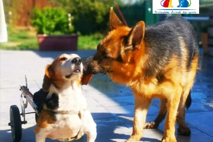 Rifugio Hope Agrigento - Cani & Gatti