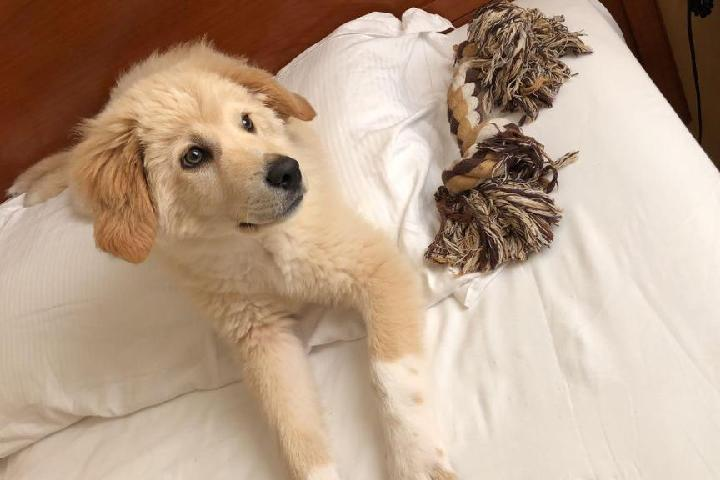 Un aiuto per i cani randagi e abbandonati