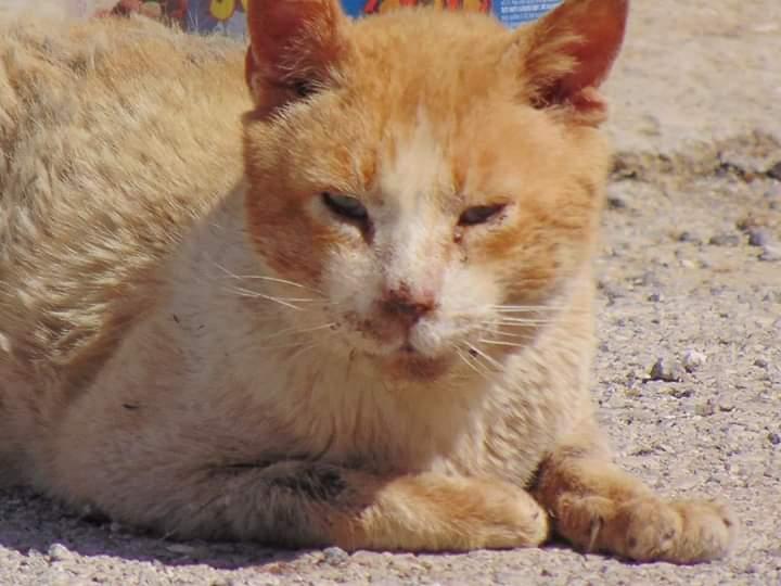 Asociación GATORU protección y defensa felina