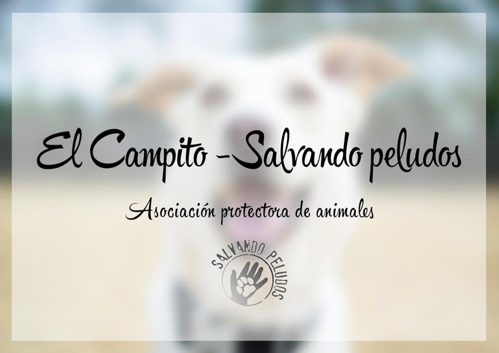El campito refugio de animales en riesgo