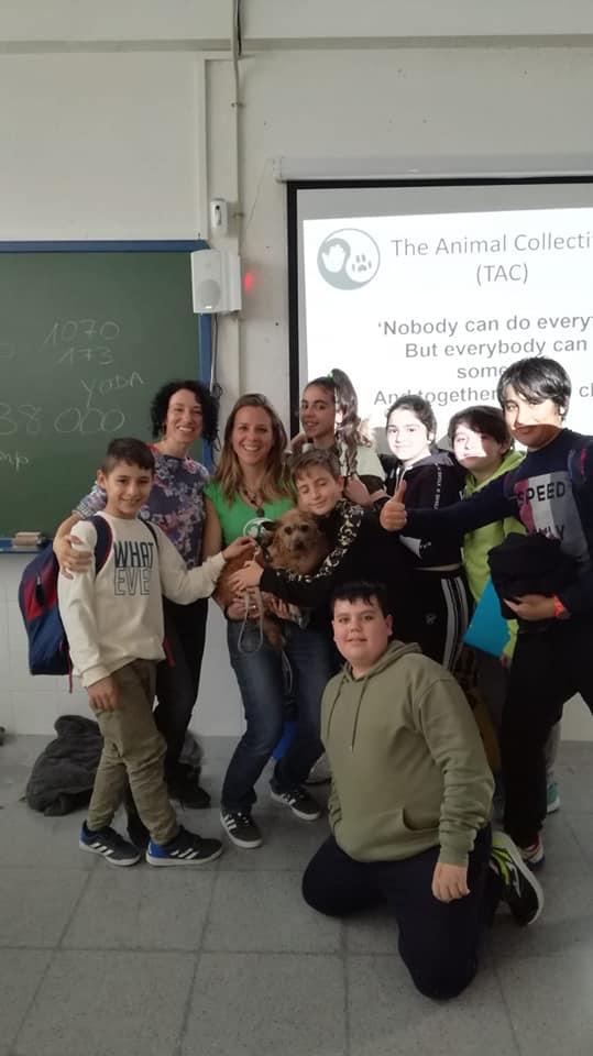 The Animal Collective (TAC)